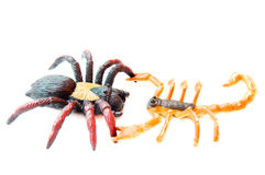 Scorpion fights spider Stock Photo