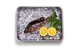 Scorpion fish Stock Image