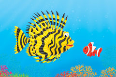 Scorpion-fish and anemonefish Royalty Free Stock Images