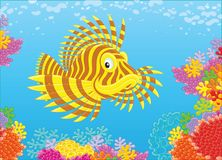 Scorpion fish on a reef. A firefish swimming in blue water over colorful corals in a tropical sea, a vector illustration in cartoon style Royalty Free Stock Image