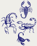 Scorpion Pandinus imperator Royalty Free Stock Images