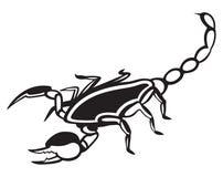 Scorpion Pandinus imperator Stock Images