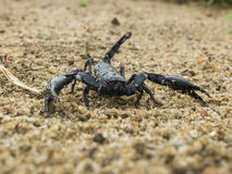 Scorpion on the sand stock photo