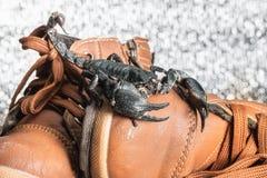 Scorpion sur des chaussures Photos libres de droits