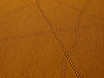 Scorpion trail. Walking routes in the desert a scorpion - Sahara 2010 stock images