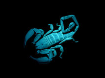 Scorpion under blacklight. Flat-rock scorpion (Hadogenes paucidens) fluorescing under UV light Stock Photo