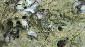 Scorpion underwater stock video footage