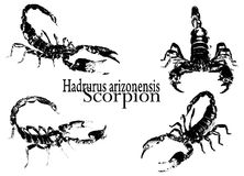 Scorpion vector Stock Images
