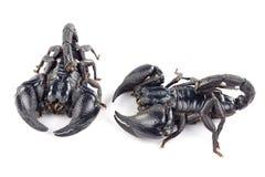 Scorpione Immagini Stock