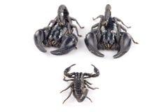 Scorpione Fotografia Stock