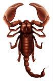 Scorpione - genere di Buthus illustrazione vettoriale