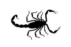 Scorpione nero di contorno isolato su fondo bianco Illustrazione illustrazione vettoriale