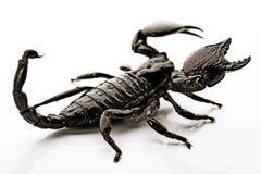 Scorpione sui precedenti bianchi fotografia stock