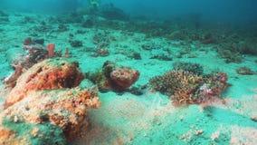 Scorpionfish op Coral Reef Filippijnen, Mindoro royalty-vrije stock foto