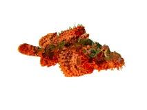 Scorpionfish op een Wit Stock Fotografie