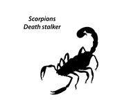Scorpions death stalker Royalty Free Stock Image
