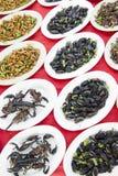 Scorpions et insectes Images libres de droits