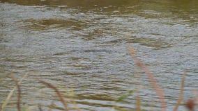 Scorrimenti dell'acqua in una corrente o in un piccolo fiume video d archivio