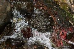 Scorrimento dell'acqua Fotografie Stock