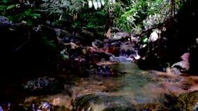 Scorrimento dell'acqua al fiume del ther nella foresta stock footage
