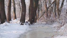 Scorrimento dell'acqua congelato in foresta video d archivio