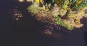Scorrimento dell'acqua della natura fra i colori strabilianti degli alberi verdi del riverline d'avvolgimento archivi video