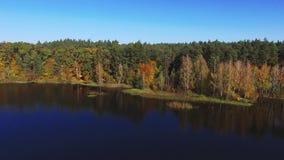 Scorrimento dell'acqua della natura fra i colori strabilianti degli alberi verdi del riverline d'avvolgimento video d archivio