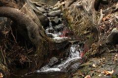 Scorrimento dell'acqua nel legno Fotografia Stock