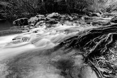 Scorrimento dell'acqua nella giungla immagini stock