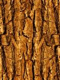 Scortecci un albero una quercia una fine in su Fotografia Stock