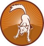 Scortecciamento arrabbiato del lupo o del cane selvaggio Immagine Stock Libera da Diritti