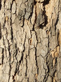 Scorza dell'albero Immagini Stock