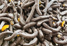 Scorze di limone ricoperte di cioccolato fondente Pasticceria siciliana tipica, Italia fotografia stock libera da diritti