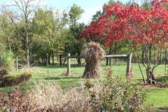 Scossa del foraggio dal legno in autunno Fotografia Stock Libera da Diritti