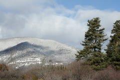 Scot pine in winter. Scot pine in Pyrenees, Pinus sylvestris Royalty Free Stock Images