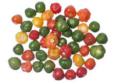 Scotch Bonnet chili Royalty Free Stock Images