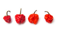 Scotch bonnet chili peppers  Stock Images