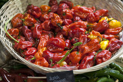 Scotch Bonnet or Habanero peppers in  basket. Selective focus Royalty Free Stock Images