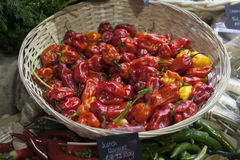 Scotch Bonnet or Habanero peppers Stock Photos