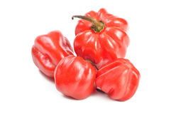 Scotch bonnet peppers (chili) Royalty Free Stock Photography