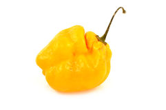 Scotch bonnet peppers (chili) Stock Image