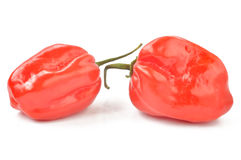 Scotch bonnet peppers on a white background Stock Images