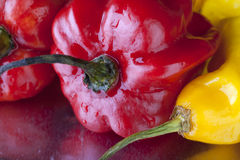 Scotch Bonnets Royalty Free Stock Image