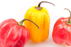 Scotch Bonnets Royalty Free Stock Photography