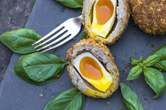 Scotch egg. Gourmet Scotch egg with running yolk Royalty Free Stock Photo