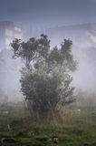 Scotch Mist In Country Turkey Stock Images