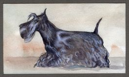 Scotch terrier painted in watercolor in profile Stock Photography