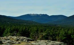 Scoth lasu sosnowy przód w Guadarrama górach zdjęcia stock