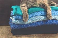 Scotish fałdu kota lying on the beach blisko sterty kolorowi ręczniki Obraz Royalty Free