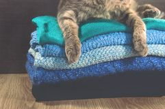 Scotish fold cat lying near a stack of colorful towels Royalty Free Stock Image
